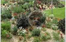 Miscanthus - Paillage horticole