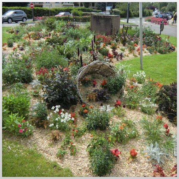 Miscanthus – Paillage horticole